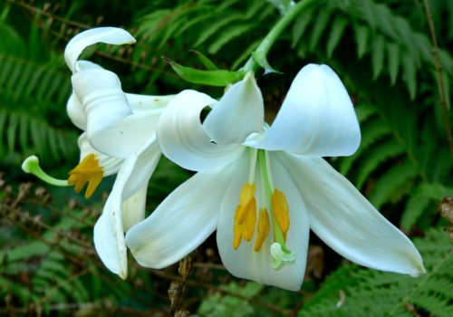 How to Learn from the Lily: Shifting Epistemologies