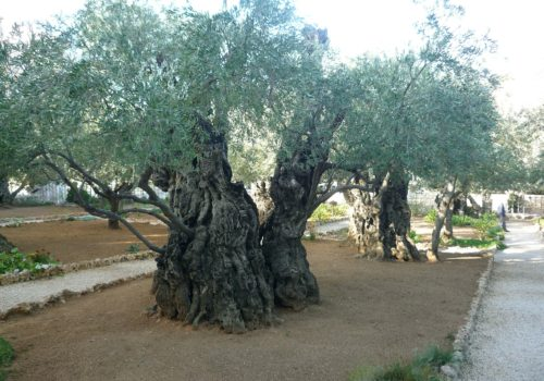 Arboreal Wisdom? Epistemology and Ecology in Judaic Sources