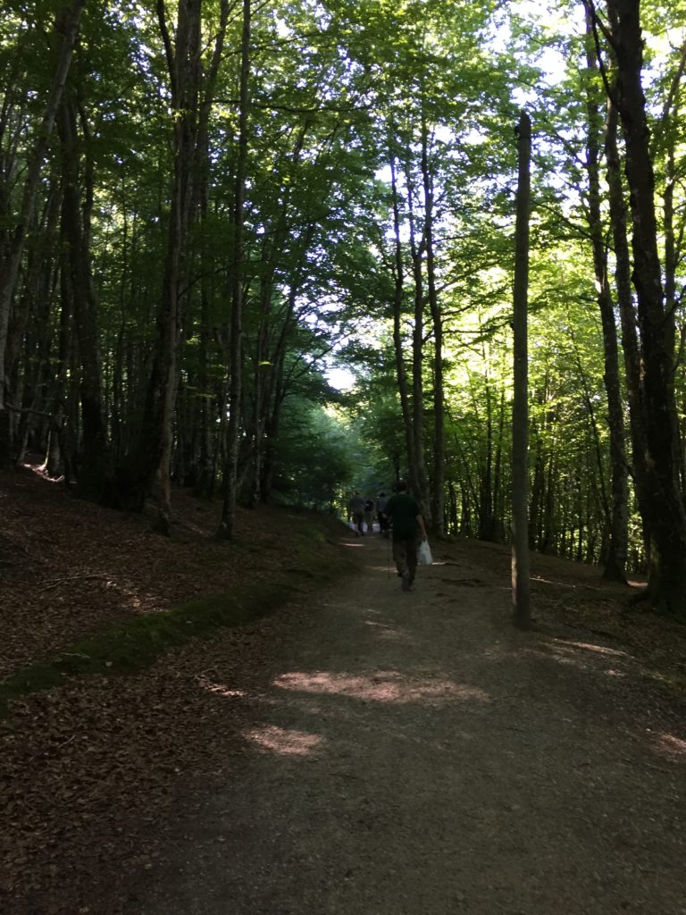 Pilgrims walking on trail through forest of tall trees